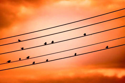 birds-on-a-wire-3670268_1280